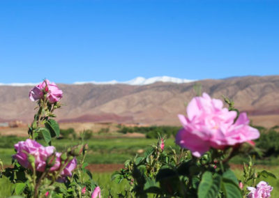 Valley of the Roses