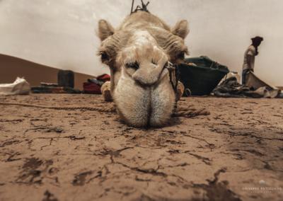 sahara-maggio-2016-1042a